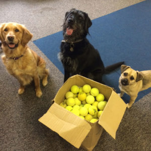 Donation Of Tennis Balls To Dogs For Good