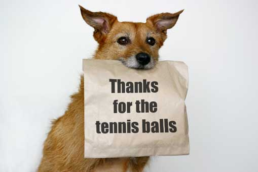 thanks for the tennis balls